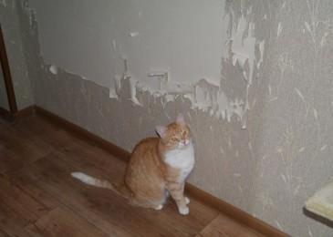 Кошка дерёт обои — что делать и как отучить