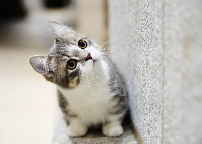 Кот дерет жидкие обои
